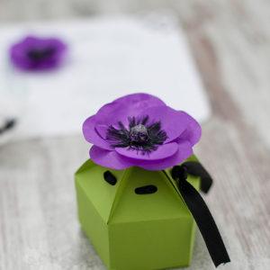 <!--:ro-->002_cutie_anemone<!--:-->